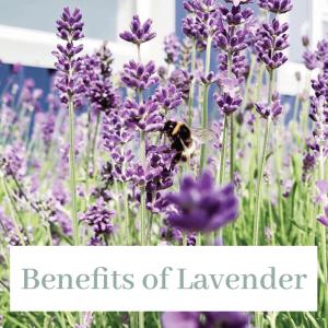 benefits-of-lavender
