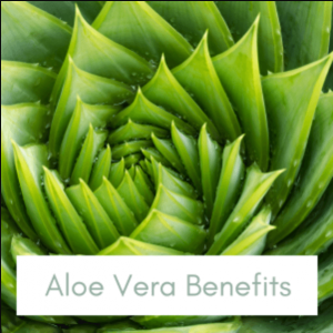 aloe-vera-benefits