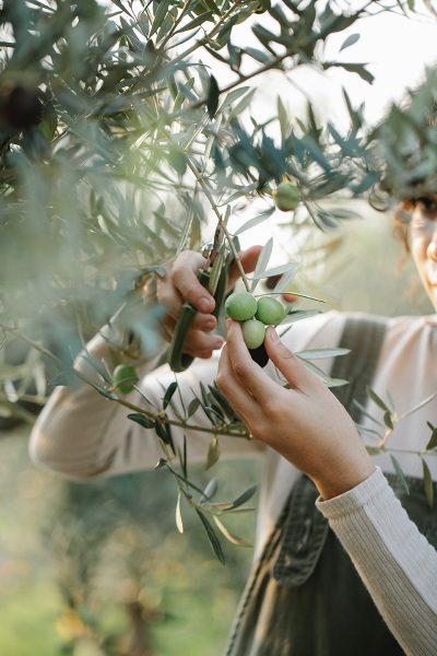 bird friendly olive oil