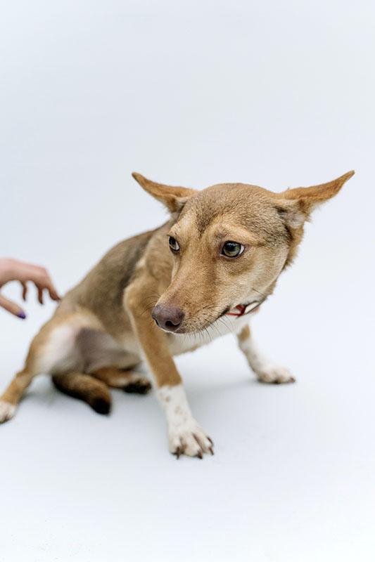 scared dog - animal testing